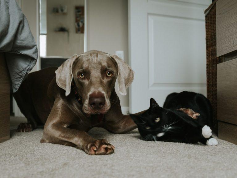 Állattartás nélkül az otthon csak egy lakás
