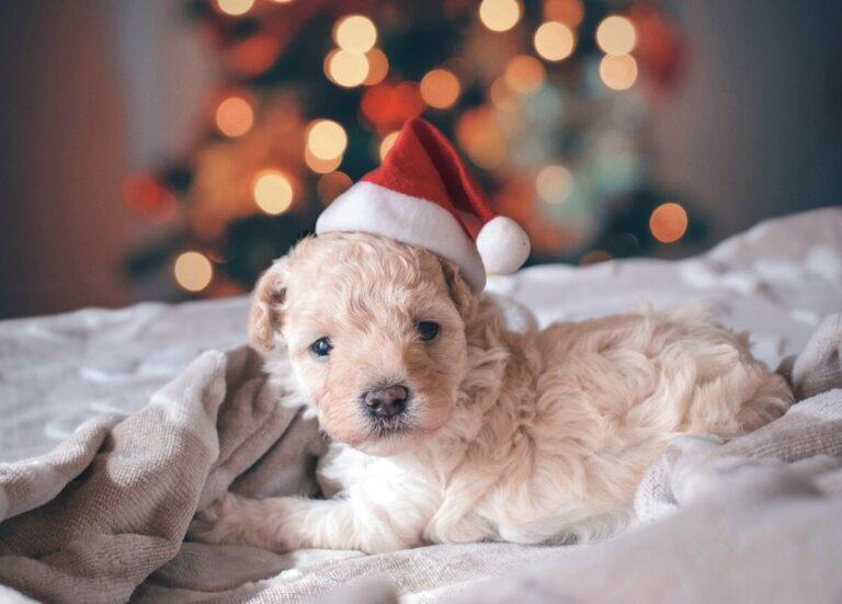 Karácsony kedvencünkkel