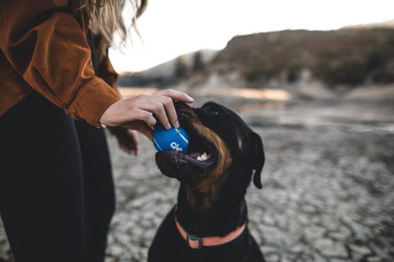 A behívás és a kutya