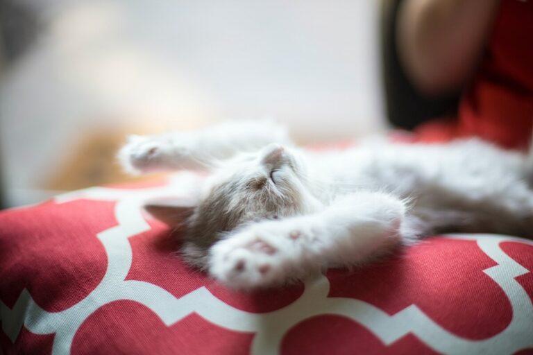 Macskabiztos otthon