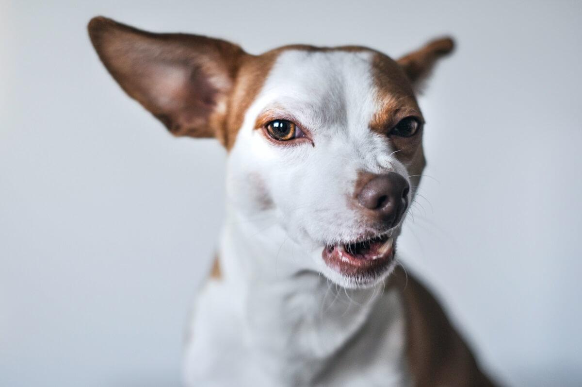 A kutyák furcsa szokásai