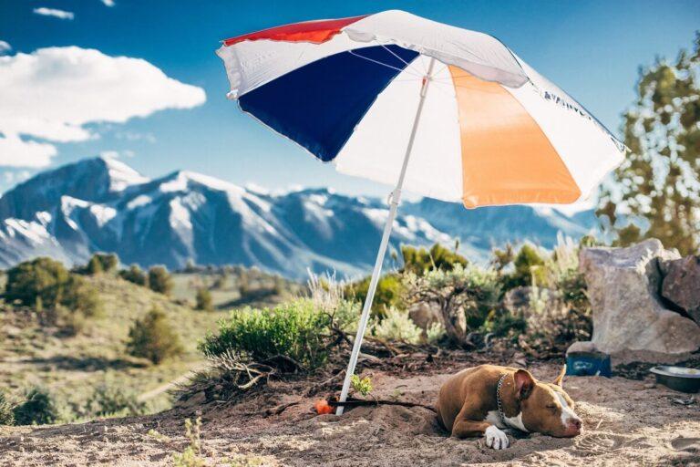 Kedvenceink védelme a nyári hőség idején